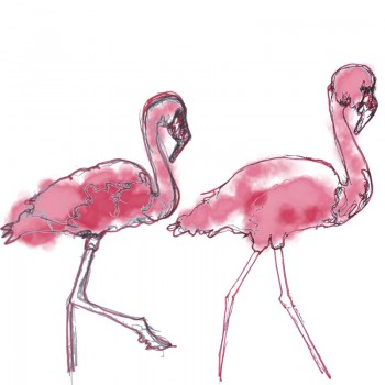Colour Flamingo Card