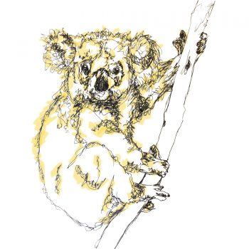 Koala Card by Emma Roberts for The Steel Rooms