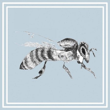 Bee Card by Julie Steel for The Steel Rooms