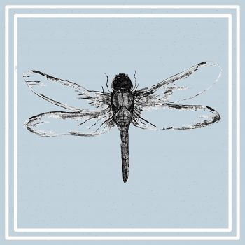 Blue Insect Cards