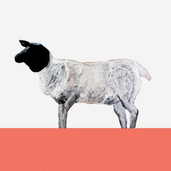 The Steel Rooms Colour Boarder Sheep Card