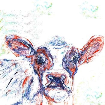 Colourful Cow Sketch Card by Julie Steel for The Steel Rooms