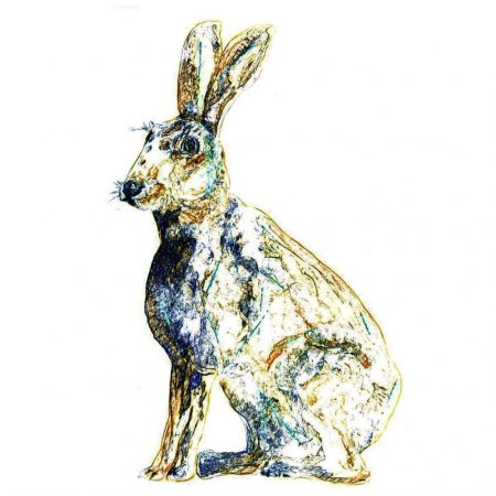 Sketch Hare by Julie Steel for The Steel Rooms